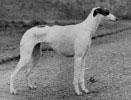 Parcancady Heatherbelle 1949