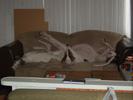 Twiggy en Hummer kei lui op de bank (Sandra Tellings)