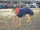 Onze Daimbler op Scheveningen met haar nieuwe jas, die zoals je ziet, nog wel even moet wennen en Nog niet zo lekker zit.<br />Maar voor de winter lekker warm als je al bijna 12 jaar bent.<br />(Eugène en Heleen de Rijk)