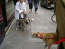 Daimbler onmoet in Parijs enkele kleine vriendinnen.<br />(Eugène en Heleen de Rijk)