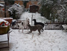 Thomas (l) in de sneeuw (Ingrid De Prins)